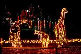 Denver Zoo Lights